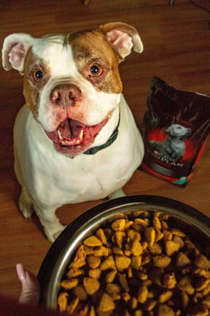 Porkchop and Purina Probiotics